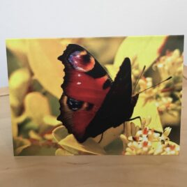 Wings of Transformation (Single Greeting Card)