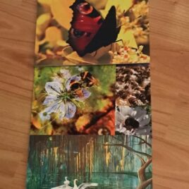 5 Birds & Bees Cards (Variety pack)
